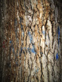 Old tree bark 2 - PhotoDune Item for Sale