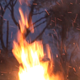 Fire Is Burning Branches - VideoHive Item for Sale