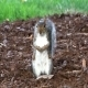 Squirrels Digging For Food & Eating - VideoHive Item for Sale