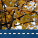 Autumn Yellow Leaf 3 - VideoHive Item for Sale