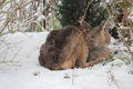 Sleeping Baby Snow Covered Deer - PhotoDune Item for Sale