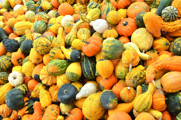 PhotoDune Pumpkins 4021133