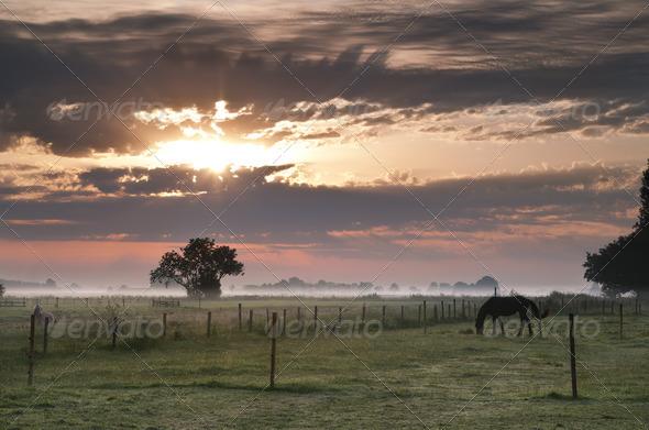 PhotoDune foggy pasture in Groningen 4102084