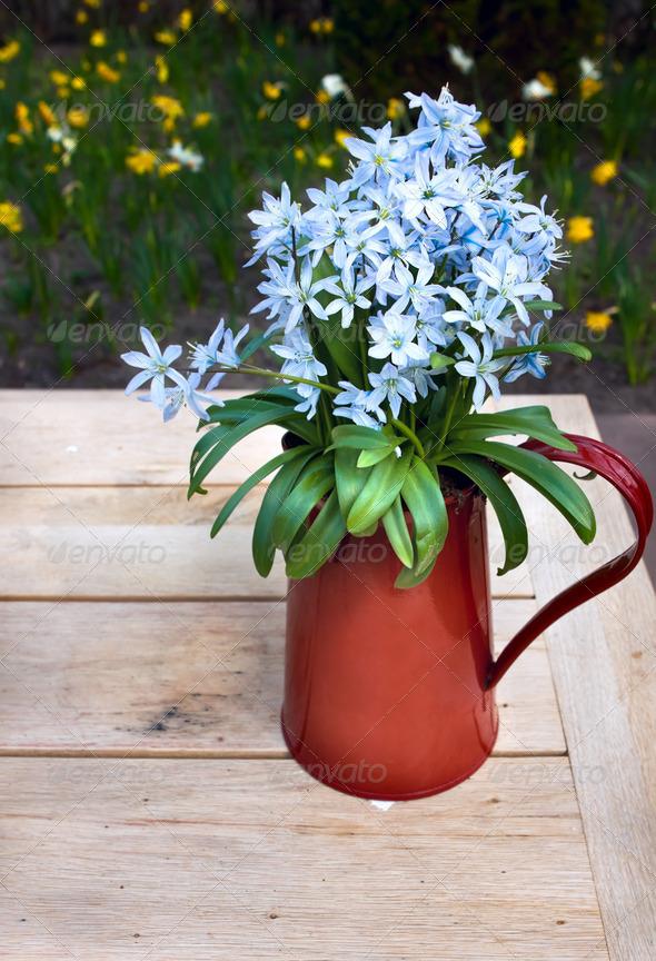 PhotoDune blue flowers in red vase 4102114