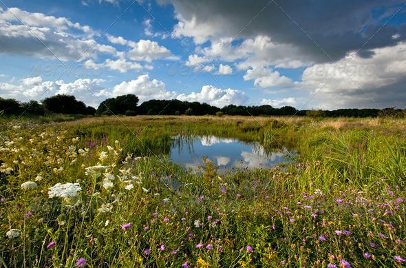 PhotoDune summer pasture with pond 4102143