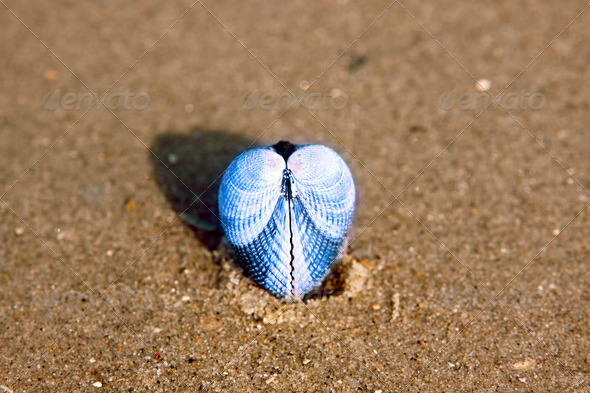 PhotoDune shell heart 4102162