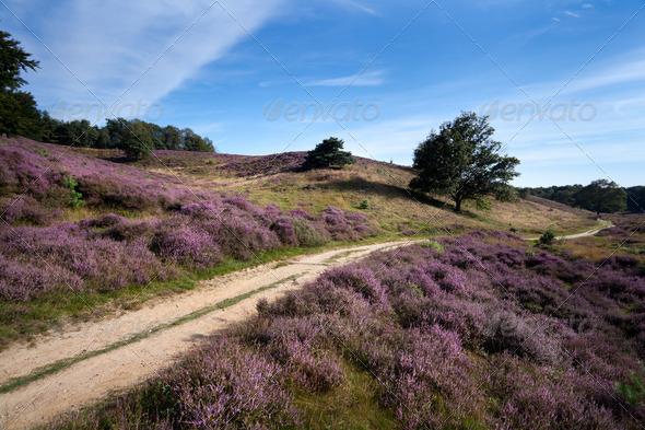 PhotoDune path between heather hills 4102168