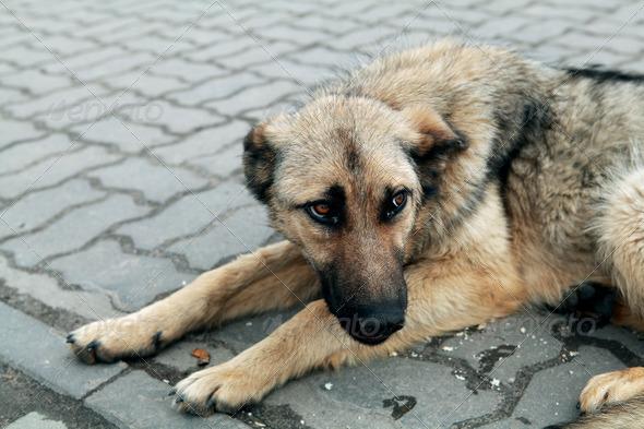 PhotoDune homeless dog 4102171