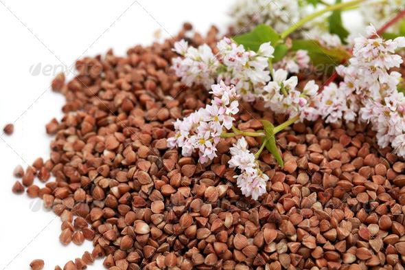 PhotoDune buckwheat seed and flowers 4102189