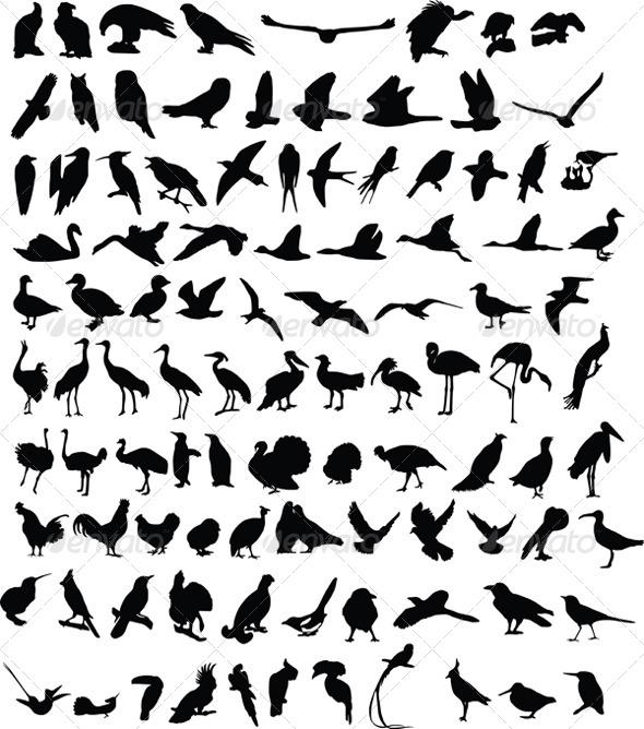 GraphicRiver 100 Birds 4044382