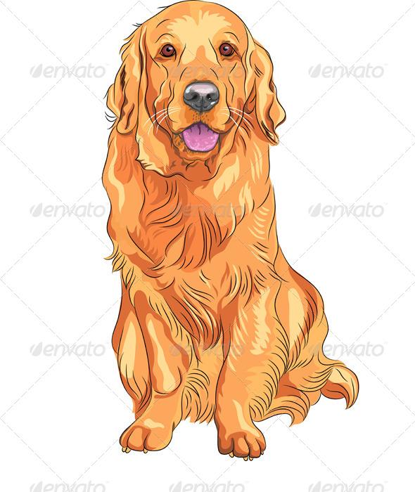 GraphicRiver Vector Dog Breed Golden Retriever Sitting 4079598