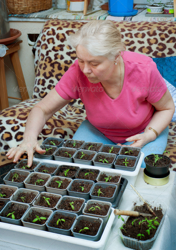 PhotoDune Woman takes care of the seedlings in the home 4124992