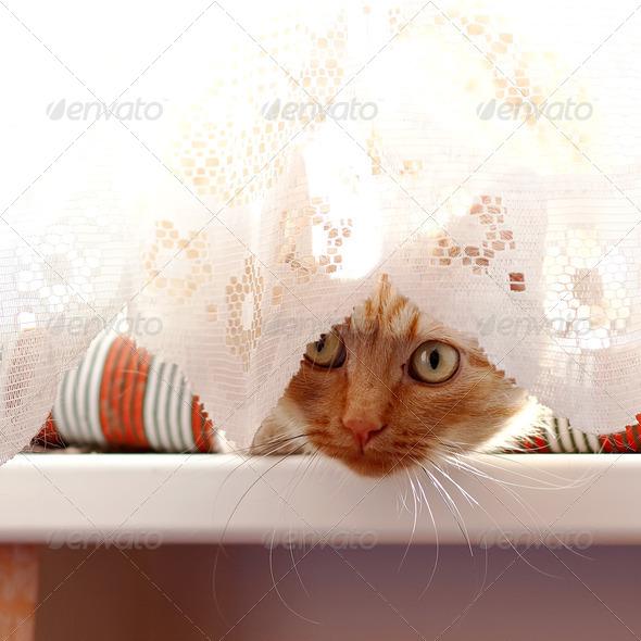 PhotoDune red cat 4133174