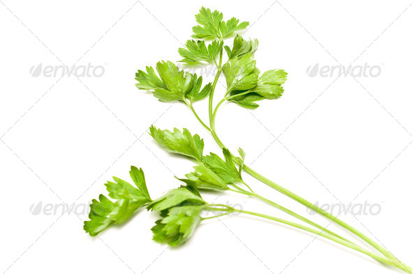 PhotoDune Fresh parsley 4133273