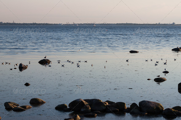 PhotoDune Sea birds on the rocks in baltic sea 4152511