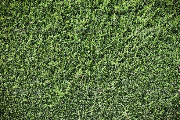 PhotoDune Green foliage wall background 4152523