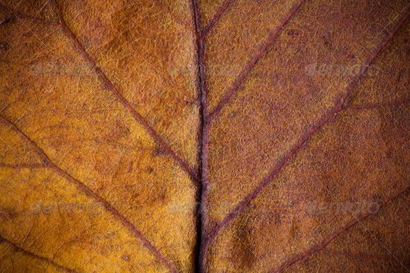 PhotoDune Closeup of beautiful fall foliage 4154188