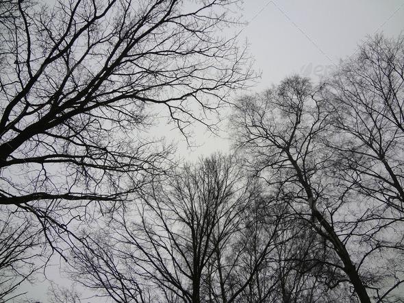 PhotoDune Winter Trees 4175300