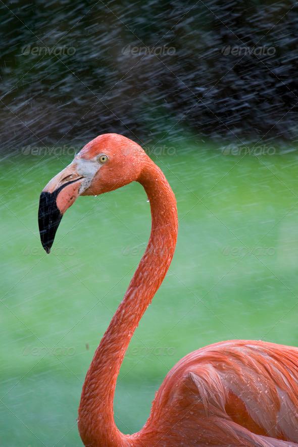 Owl beak template stock photos graphics for Flamingo beak template