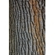 Texture closeup shot of brown tree bark - GraphicRiver Item for Sale