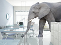 elephant in a room - PhotoDune Item for Sale