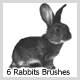 6 Rabbits Brushes (2500px) - GraphicRiver Item for Sale