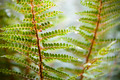 Fern Details - PhotoDune Item for Sale