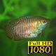 Aquarium And Fish 1 - VideoHive Item for Sale