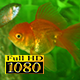Aquarium And Fish 2 - VideoHive Item for Sale