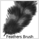 Feathers  Brushes - GraphicRiver Item for Sale
