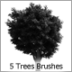 5 Trees Brushes - GraphicRiver Item for Sale