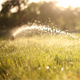 Watering The Lawn - VideoHive Item for Sale