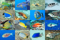 Set of 16 fishes - PhotoDune Item for Sale