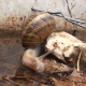 Snail Drinks Water - VideoHive Item for Sale