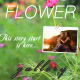 Romantic Flower Photo Gallery  - VideoHive Item for Sale