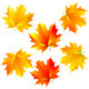 Maple leaves - GraphicRiver Item for Sale
