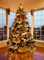 Beautiful xmas tree at dusk - PhotoDune Item for Sale