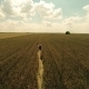 Flying Over Girl Playing Piano in Wheat Field 3 - VideoHive Item for Sale
