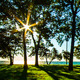 Green Chicago Through the Trees - VideoHive Item for Sale