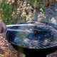 Sea Bream Fish Grilling On BBQ      - PhotoDune Item for Sale