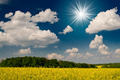 Amazing image sun,field and blue sky. - PhotoDune Item for Sale