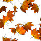 Maple Leaf Falling Transition - VideoHive Item for Sale