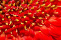 Red Gerbera Flower Polen - PhotoDune Item for Sale