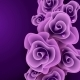 Purple Rose Background. - GraphicRiver Item for Sale