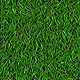 Short Realistic Grass - 3DOcean Item for Sale