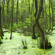 Swamp, near Prerow - PhotoDune Item for Sale