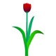Growing and blossoming flower of a tulip - ActiveDen Item for Sale