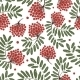Rowan Branch with Berries - GraphicRiver Item for Sale