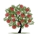 Rowan Tree with Berries for your Design - GraphicRiver Item for Sale