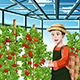 Farmer Harvesting Tomatoes - GraphicRiver Item for Sale